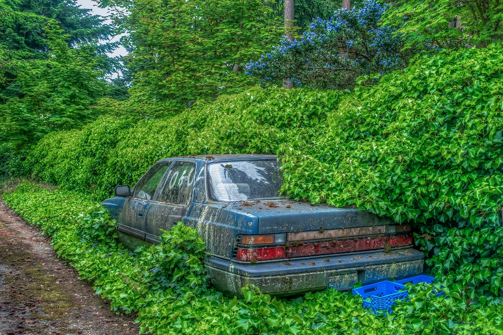 car, overgrown, abandon, abandoned, vehicle, travel, nature