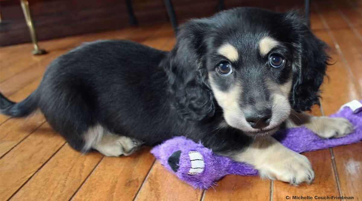 How to avoid a pet scam. (Photo: Bentley Puppy by Michelle Couch-Friedman)