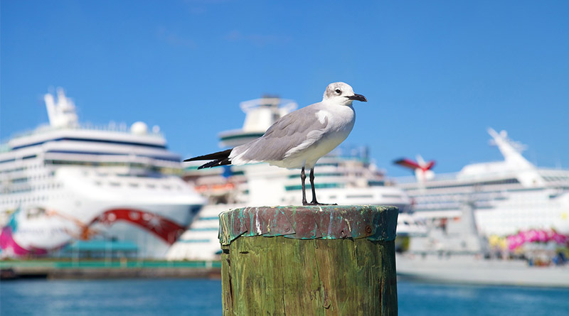 This family got left on the dock! Is the cruise line responsible?