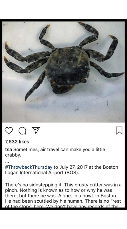 Live crabs also are frowned upon by the TSA