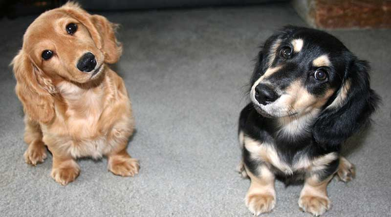Will the WOOFF Act prevent further pet deaths