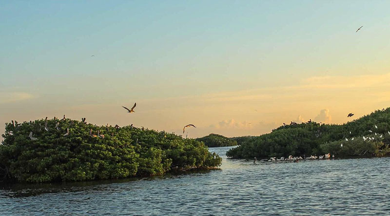 Taking a road trip with teenagers -- Michelle Couch-Friedman's photo of Tarpon Bay