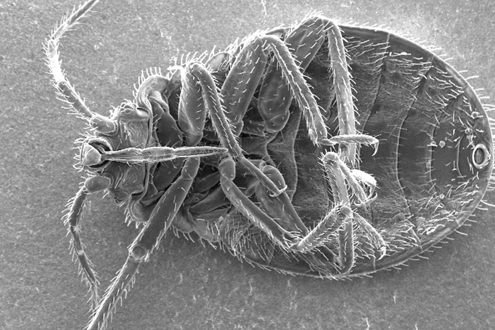 bedbug, infested, hotel, room, infestation, infest, bugs, insects, motel