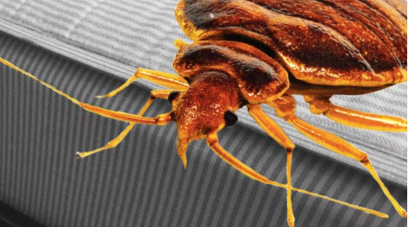 The truth in this bedbugs case will blow your mind
