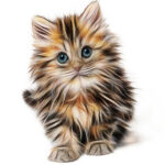 Southwest's pet policy charges $95 each way for a cat.