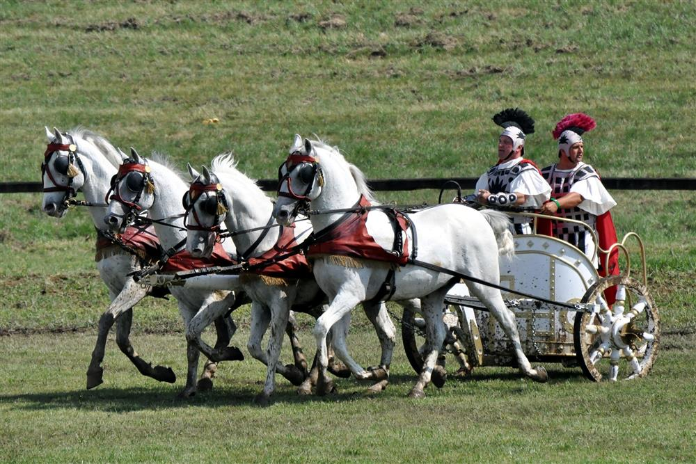 chariot, horse, roman, rome, ride, vintage, old, transport, drive, driving, rent, rental, vehicle