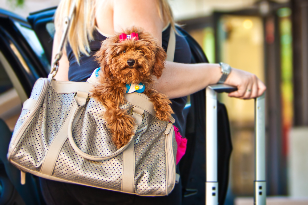 The essential survival guide to traveling with pets