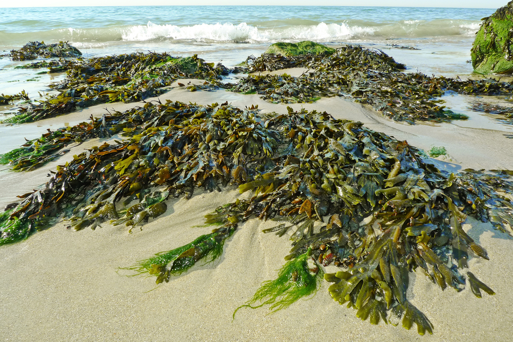 Seaweed on the shores — can I get a refund for my vacation rental deposit?